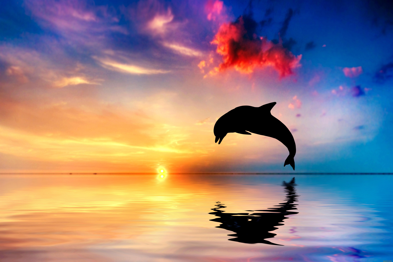 Обои дельфины. Животные foto 6